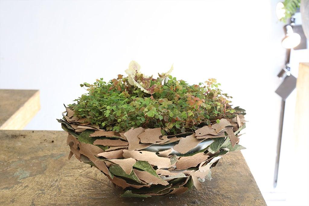 Dekoschale aus Pflanzen