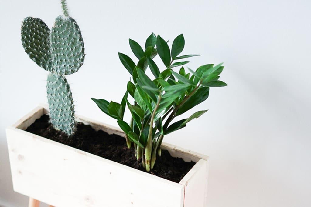 Plant Box aus Holz