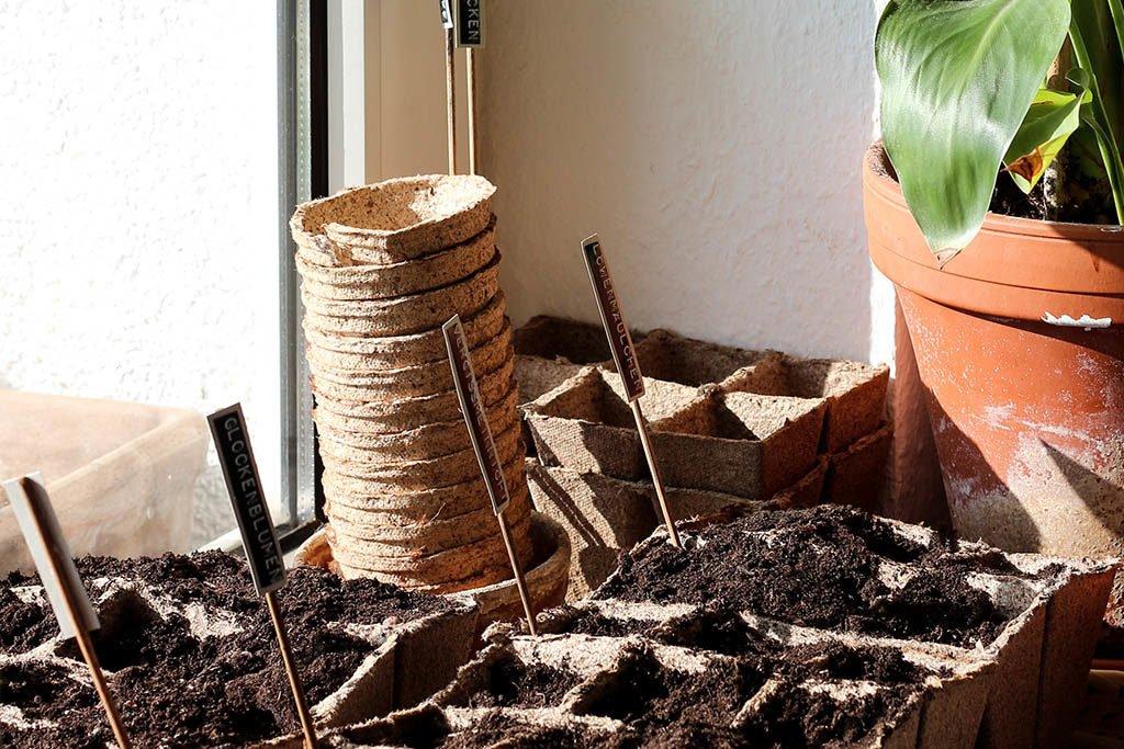 Geheimtipp zum Schrebergärtnern: Pflanzen vorziehen