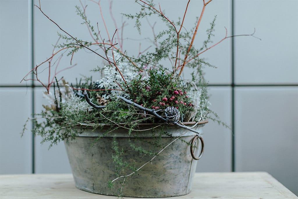 Winterliche Pflanzen im Shabby Chic