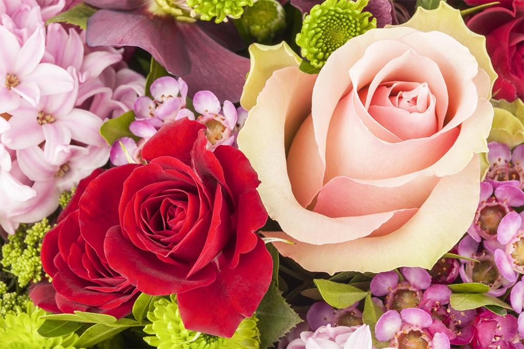 Whatsapp bedeutung rote rose 🌹 Rose