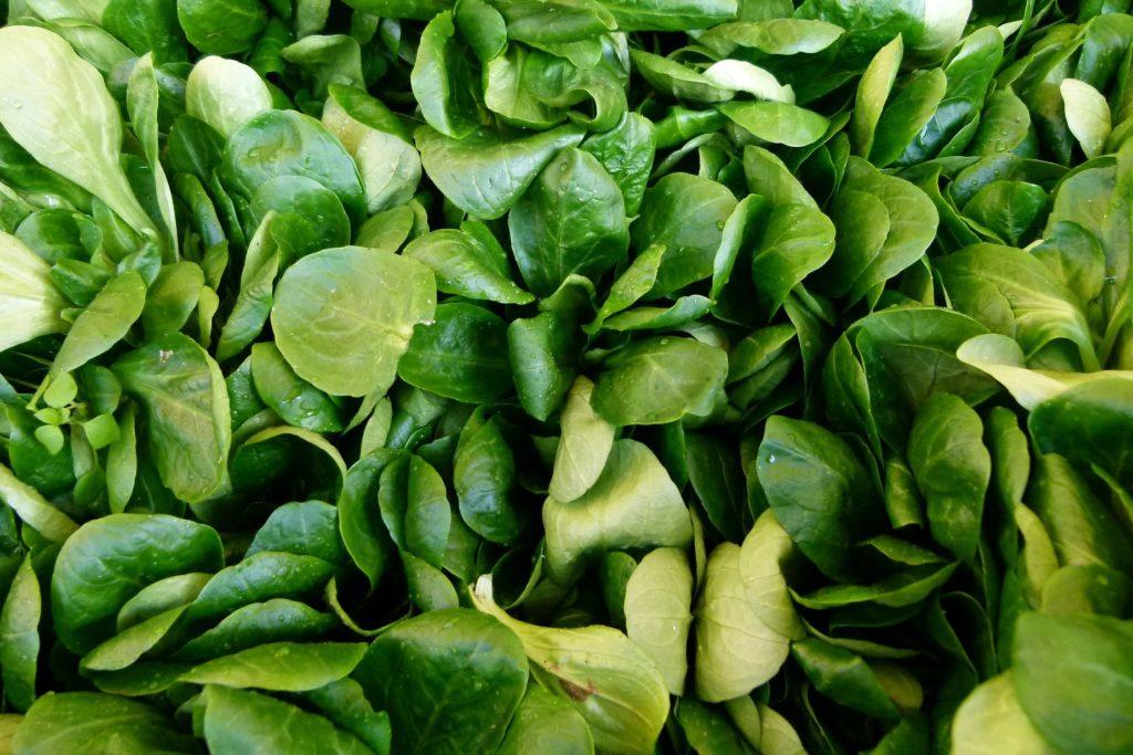 Der Feldsalat
