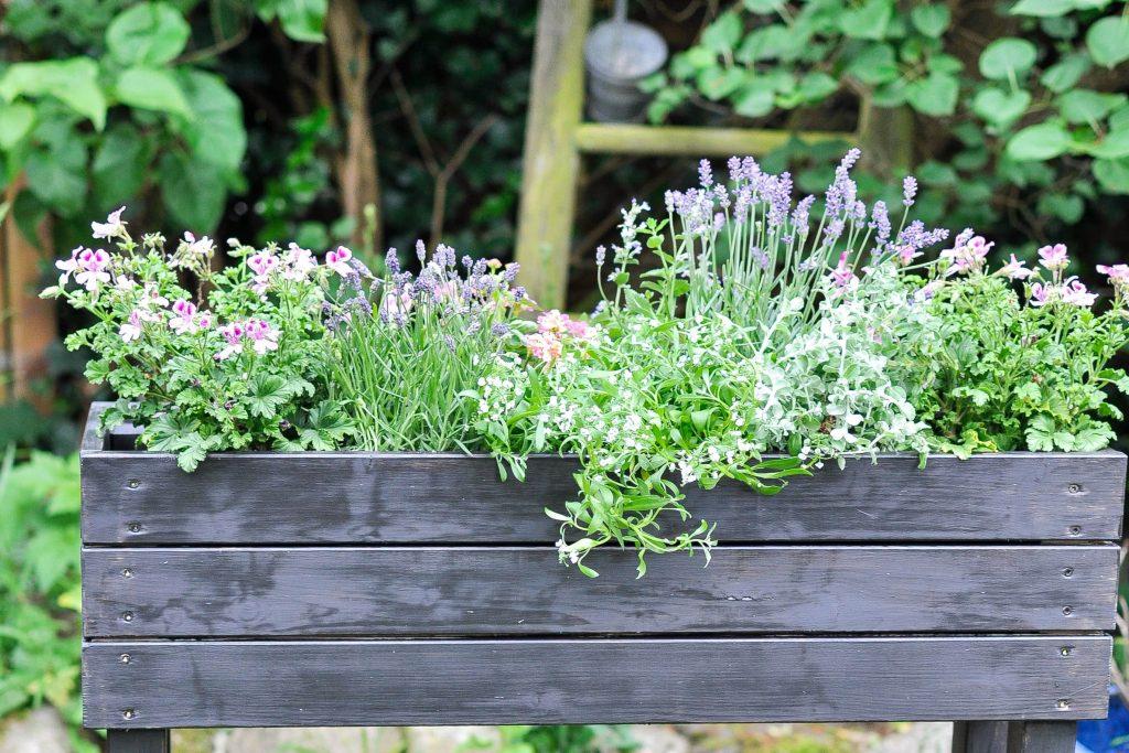 DIY Hochbeet mit Sommer-Duftblumen