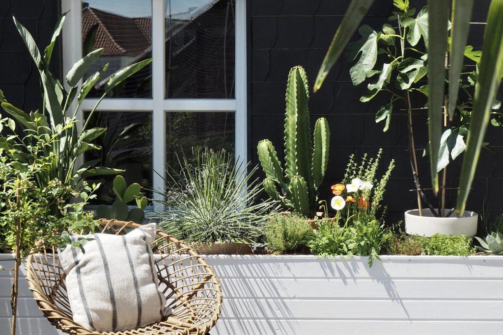 Grünpflanzen | Perfekte Deko für den In- und Outdoorbereich